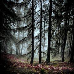 darkness by Roberta Fuganti on 500px