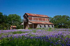 Barn wedding. Sisterdale Dance Hall: Texas.