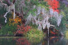 Where and When to See the Best Fall Color Across the Southeast US: South Carolina - Peak Fall Color Guide