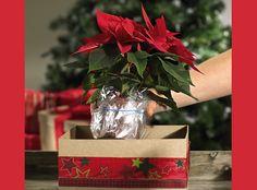 www.rustica.fr - Faire soi-même : composition de Noël avec des poinsettias - Etape 2