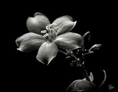 Passion Photography, Boy Photography Poses, Flower Photography, Sale Poster, Hair Painting, Dark Backgrounds, Pencil Art, Black And White Photography, Instagram Images