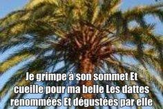 Nouvel article depuis le site littéraire Plume de Poète - Mon palmier ce seigneur -Brahim BOUMEDIEN-