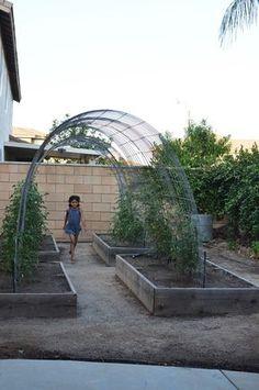 Arche support de plants de tomate.