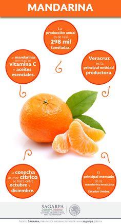 Las mandarinas son ricas en vitamina C y aceites esenciales. SAGARPA SAGARPAMX