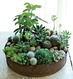 28 Likes, 2 Comments - Indoor Plants (@plantsindoor) on Instagram