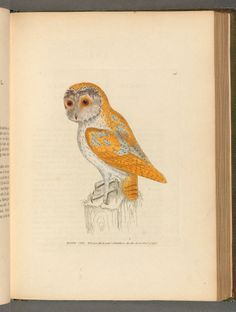 vol. 1 - The birds of Great Britain, - Biodiversity Heritage Library