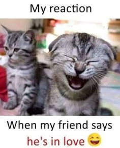 Funny hugot, funny cats and dogs, cats Cat Jokes, Some Funny Jokes, Funny Cat Memes, Funny Cat Videos, Funny Quotes, Stupid Quotes, Funny Minion, Funny Cartoons, Funny Comics