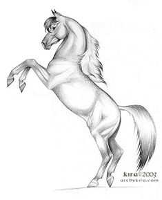 "Horse Drawings | 12"" ballpoint ink on paper"