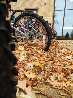 #bicycles #fall #emu