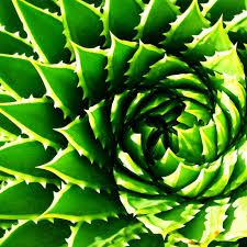 Image result for spiral images in nature