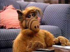 ALF!  And yes, I had the ALF doll.  (Alien Life Form) in case you're too young to know.