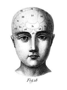 Phren head