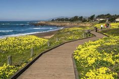 "♥ From the Facebook page of Cambria Inns Collection ~ March 2016 ~ ""Spring is a great time to visit Cambria. We love the bright yellow flowers contrasting with the blue skies and ocean."" ♥"