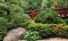 Image result for anderson japanese gardens
