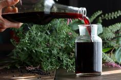 """Elderberry Syrup Recipe (VIDEO) - Hippocrates Is Said To Have Called It . . .  His """"medicine chest,"""" and for thousands of years it's been revered in folk medicine for its healing properties. (source) Now studies are starting to confirm what tradition has long held: elderberries are a delicious and effective way to support immune function during cold and flu season."""