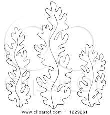 Image result for seaweed drawing