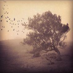 "@alijardine's photo: ""Longing for Adventure"""