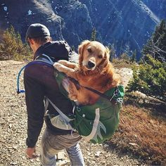 """""""Dad forgot to bring my booties. My paws hurt."""" #campingwithdogs @jaimevedres"""
