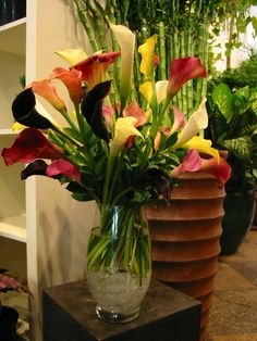 This is a floral arrangement that features white, yellow, purple and red calla lilies.  See our entire selection at www.starflor.com.  To purchase any of our floral selections, as gifts or décor, please call us at 800.520.8999 or visit our e-commerce portal at www.Starbrightnyc.com. This composition of flowers is generally available for same day delivery in New York City (NYC).  V181