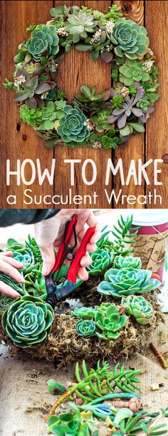 How to Create a Succulent Garden Wreath Like and Repin.  Noelito Flow instagram http://www.instagram.com/noelitoflow