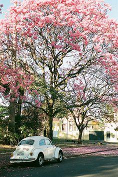 Ideas for flowers spring photography pictures Volkswagen Vintage, Volkswagen New Beetle, Volkswagen Golf, Flower Backgrounds, Phone Backgrounds, Iphone Wallpapers, Fitz Huxley, Whatsapp Wallpaper, Wall Paper Phone