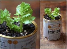 Grow your own celery! Read through this post for directions.