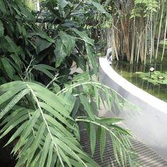 - ̗̀ plants are friends ̖́- Green Plants, Cactus Plants, Nature's Miracle, Plants Are Friends, Plant Aesthetic, No Rain, Botany, Mother Nature, Planting Flowers