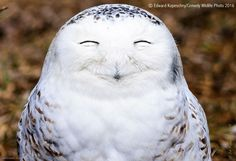laughing owl comedy wildlife photography