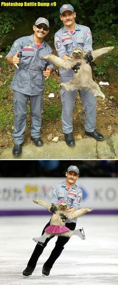 The internet is no stranger to Photoshop Battles. They are probably the best thing about the internet, too. All sorts of Donald Trump and awesome animal pictures distorted and edited by hilarious Photoshop artists. Funny Koala, Funny Animals, Cute Animals, Koala Meme, Funny Sloth, Super Funny, Funny Cute, The Funny, Funny Photoshop
