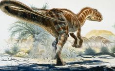 Carcharodontosaurus, a huge carnivore from the Upper Cretaceous period http://www.bbc.co.uk/nature/life/Carcharodontosauridae
