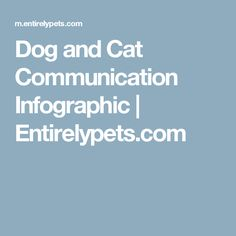 Dog and Cat Communication Infographic   Entirelypets.com