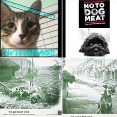 Creatives join the #NoToDogMeat #notocatmeat campaign & really do spread the word in great style. #Awareness is key