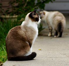 looks exactly like the kitty i had for 17 years. she's been gone for several years now, but i still miss her every day. i know she will be in the place He has prepared for me. Can't wait to see her again...
