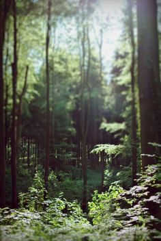 Forest - Original Fine Art Photography - Print