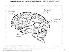 Blank Diagram Of The Inside Of The Brain Blank Brain