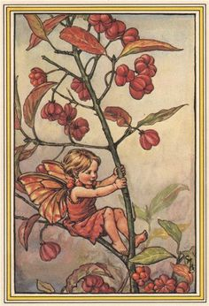 FLOWER FAIRIES/BOTANICALS: Spindle Berry; This is an original vintage Cicely Mary Barker Flower fairies colour print. It is not a modern reproduction, 1985; approximate size 13.0 x 9.0cm, 5.25 x 3.5 inches