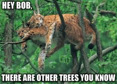 There are other trees...