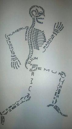 Skeletal System diagram for study
