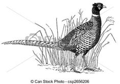 Pheasants Images and Stock Photos. 3,880 Pheasants photography and ...