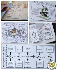 Teaching about cells? Try cut-and-paste activities for interactive notebooks. Read this blog post for more ideas!