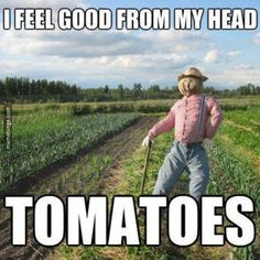 Feel good from my head, tomatoes