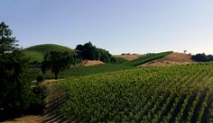 You'll delight in visits to wineries in the Dry Creek Valley, rides through scenic vineyards with the Mayacamas Mountains in the distance, and delectable meals at restaurants like Charlie Palmer's Dry Creek Kitchen while on a Sonoma bike tour.