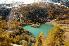 Join our guide on board of the Bernina Express for a day trip to Switzerland. The Last Station, Bernina Express, Tree Line, Northern Italy, Lake Como, Footprints, Tour Guide, Alps, The Locals