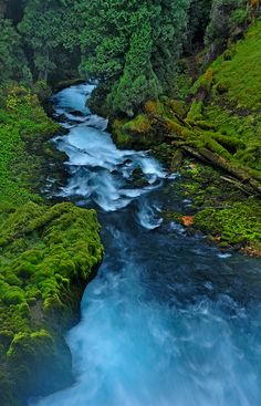 Beautiful McKenzie River, Oregon. I would move to Oregon