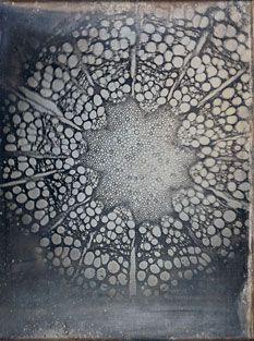 Unsichtbar-Ettingshausen-Clematis by Josef Maria Eder and Eduard Valenta