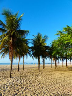 Rio de Janeiro: view of coconut trees on Leme Beach with Copacabana Beach in the background.
