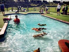 The Corgi's are coming!!! Sunshine Corgi rescue is hosting their annual pool party here on Sat 14, from 3:30-5pm. Corgi or not ALL are invited. A donation will be taken to assist with the ones in foster care. RSVP by faxing shots if we have them here at HP call us to put you on the Corgi Party List. fax:4072825654 phone:4072825656