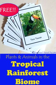 {FREE} Plants & Animals in the Tropical Rainforest Biome Cards - What gorgeous bird mates for life? These free plants and animals in the tropical rainforest biome c - Rainforest Preschool, Rainforest Classroom, Rainforest Crafts, Rainforest Biome, Preschool Jungle, Preschool Science, Animals Of The Rainforest, Rainforest Project, Montessori Science