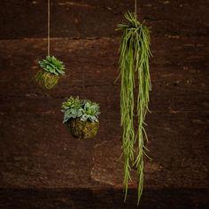 Trouva: Wyld Home Faux Echeveria In Moss Ball