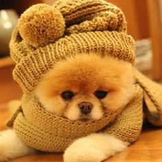 Getting ready for cold autumn days.
